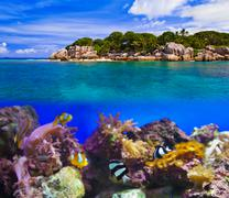 tropical island and fishes - stock photo