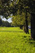 Avenue of trees in the park - stock photo