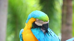 Colorful parrot macaw sequence Stock Footage