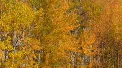 Video of falling leaves in autumn Stock Footage