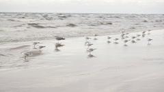 Girl raises gulls Stock Footage