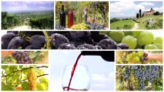 Land of wine montage Stock Footage