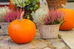 Pumpkin and heather Stock Photos