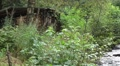 Old wooden bridge pan with wild river and house in forest HD Footage