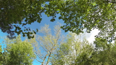 Trees and Clouds Time Lapse Stock Footage