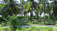Beautiful palm trees and amazing beach in Gili Air island Stock Footage