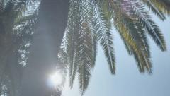Sunshine Palm Tree Paradise - 29,97FPS NTSC Stock Footage