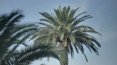 Tropical Palm Tree Breeze - 29,97FPS NTSC - stock footage