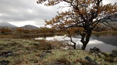 Fall lake tree colors dynamic slider motion sun side light autumn fall - stock footage