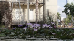 Artificial pond with lilac  water lilies Stock Footage
