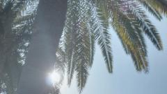 Sunshine Palm Tree Paradise - 25FPS PAL - stock footage