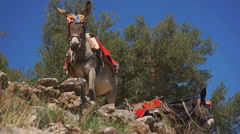 Donkeys have a rest.  Stock Footage