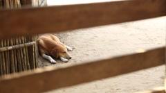 Sleeping dog Stock Footage