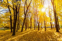 sunny autumn park - stock photo