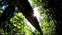 Elevated Capilano suspension footbridge walkway Treetops Eco forest Canada - stock footage