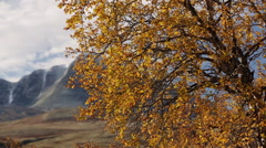 Fall tree colors dynamic slider motion sun distant mountains autumn fall - stock footage