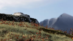 Fall rock bryophyte colors dynamic slider motion sun distant mountains autumn fa - stock footage