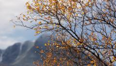 Fall tree colors dynamic slider motion overcast distant mountains autumn fall Stock Footage