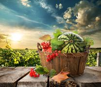 Watermelon in a basket Stock Photos