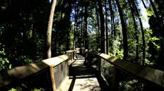 POV walking elevated pedestrian suspended Treetop walkway Capilano  Canada - stock footage