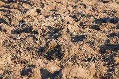 field arable - stock photo
