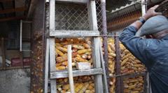 Corn crib, dried corn cobs, farm, farmer working, storage, granary - stock footage