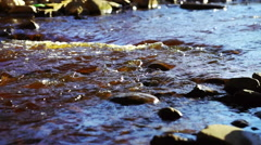 Wild forest river in sunny day Stock Footage
