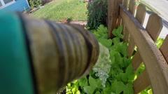Hose watering flowers Stock Footage
