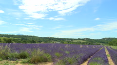 Lavender field with lined plants on the provencal plateau Stock Footage