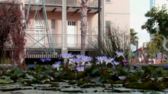 Artificial pond with lilac  water lotuses Stock Footage