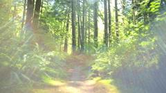 POV ECO sun flare Temperate Rain Forest coniferous Fir tree Canada - stock footage