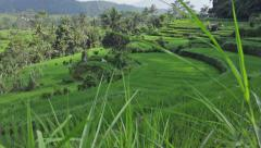 Rice terrace view in Bali Stock Footage