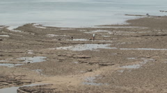Panama: Man with bucket explores Panama Bay at low tide. Stock Footage