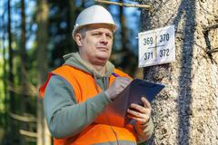 Lumberjack with folder near marked tree in forest Stock Photos