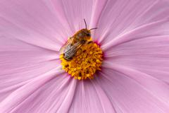 Bee pollinating flower Stock Photos