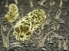 fantasy microbes or bacteria or virus.  science 3d illustration - stock illustration