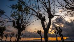 Silhouette of Scary looking trees and sunrise time lapse - stock footage