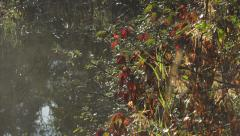 Misty Autumn Morning Sun and Leaves over Pond tilt up 4K Stock Footage