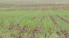 Field sown with grass Stock Footage