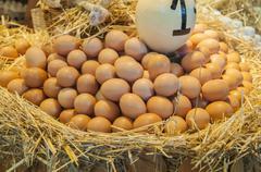 Lot of egg Stock Photos