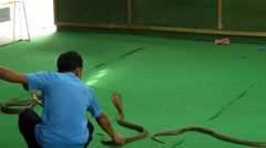 Animal Trainer with Poisonous Cobra. Thailand Snake Show. Stock Footage