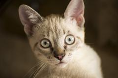 Small white cat Stock Photos