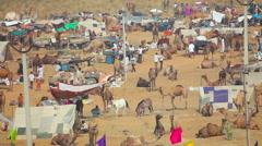Pushkar Camel Mela. The largest camel trading fair in the world Stock Footage