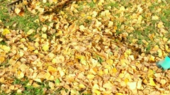 Woman rakes yellow autumn leaves Stock Footage