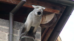 Gargoyle on top of a wall underneath a building's roof Stock Footage