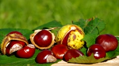Conkers on wooden table - stock footage