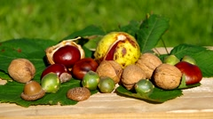 Conkers on wooden table Stock Footage