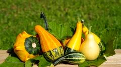 Ornamental pumpkins on wooden table - stock footage