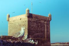 The seagull on the wall at skala du port Stock Photos