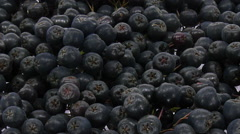 Time-lapse of drying aronia berries Stock Footage
